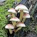 Überall hat's Pilze dran :-)