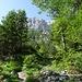Den anfänglichen Bergwald hat man bald verlassen und steht