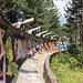 """Trebević - Unterwegs an der Olympischen Bob- und Rodelbahn. Auch hier ist momentan kein Sportbetrieb möglich. Die Bahn ist allerdings """"begehbar"""", und das nutzen überraschend viele Einheimische und Touristen. Auch wir dackeln durch die mit unzähligen Graffitis verzierte Betonrinne."""