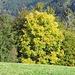 Die schönen Farben des Herbstes