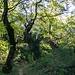 Zustieg durch den ursprünglichen Wald
