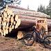 <b>È un piacere per gli occhi vedere il risultato del lavoro dei forestali.</b>