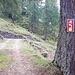 <b>Quota 1635 m, inizia lo strappo sotto l'Alpe Piano di Pescia.</b>