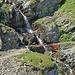 Wasseraufnahme bei einem Seitenbach