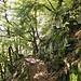 Am Anfang auf einfachen Waldwegen....