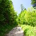 Ein Forstweg