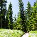 noch ein Forstweg