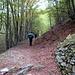 Dopo Monte il sentiero diventa un lungo traverso in faggeta, molto largo