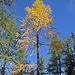Allmählich hält der Herbst Einzug oberhalb von Goppenstein.