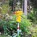 Abzweigung in den steilen Waldaufstieg zur Marchegga.