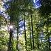 Hier ist rumeninwald