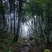 Dschungel im Schwarzwald