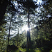 Anfangs noch im Wald...