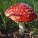 ...wo es unzählige Pilzen gibt und...