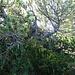 Der Gulmen-Gipfel - ein botanischer (Irr-)Garten