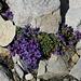 Last flowers of the season?