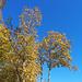 Schöne Herbstfarben allenthalben