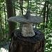 Steinhut schützt Baumstrunk im Abstieg über Türlis