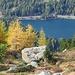 contrasto dei larici e lago