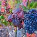 Calmont Wein