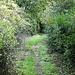 durch viel Grün schlängelt sich der Weg