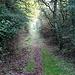 bald wieder Sonne am Ende des grünen Tunnels