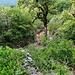 weiter auf dem Wanderweg, der jetzt nur noch durch die Markierung (am Baum) zu erkennen ist