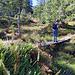 Brücken im Sumpfgebiet.