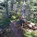 Auf dem gut bewaldeten Schlierengrat.