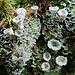 Mikrokosmos im teils märchenhaften Wald.