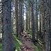 Gefolgt von einem eher düsteren Wald.