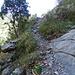 hier schon auf dem Abstieg nach Navacelles