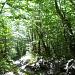 Dans la forêt en-dessous du chalet