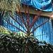 Tag 3 (19.10.2019) - بيروت (Bayrūt):<br /><br />Grossblättrige Schefflera (Schefflera actinophylla), die auch als Regenschirmbaum bekant ist; sie wächst im Libanon in Meeresnähe als Zierpflanze in Gärten dank milden Wintertemperaturen. Der robuste Baum ist in Mitteleuropa eine beliebte Zimmerpflanze. Ursprünglich stammt die Art aus dem nördlichen Australien, Java und Neuguinea.