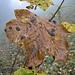 Herbst lässt grüßen