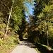 Runde in Scheffau: im Aufstieg zu den Obholz-Höfen