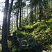Erst noch durch den Wald.