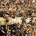 Viel Arbeit auf dem Ameisenhaufen und das am Nationalfeiertag