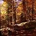 güldener Wald