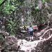Siamo entrati nel bosco. Sulla sx si nota il fusto di un pino scortecciato: viene fatto apposta dai guardiaparco per farli morire; sono alberi importati nell'800 che con la loro diffusione distruggono la vegetazione endemica.