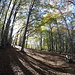<b>È una strada forestale che si sviluppa in una faggeta non troppo fitta, che permette al sole di rischiararla abbondantemente. È un vero piacere pedalare in queste condizioni. </b>