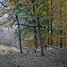 Resti in legno di vecchie teleferiche.