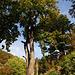 Riesige Kastanienbäume am Weg