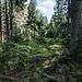 Man taucht ein in den Wald ...