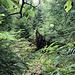 """Innerhalb des Grüns: jetzt ging das lustige Wurschteln durchs Unterholz los. So """"weit"""" wie hier ging der Blick selten."""