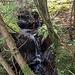 Gefunden! Das namenlose Bächle. Ich folge ihm in Fließrichtung und hoffe, weiter unten wieder eine Forstweg zu treffen.