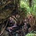 ... oder unterspült die Wurzelteller von umgestürzten Bäumen. Es ist ein rechter Dschungel.
