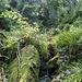 Hier kraxel ich entlang des Ilgenbachs über Felsblöcke und durchs Grün im Kessel unterhalb des Wasserfalls. Noch sehe ich ihn aber nicht, sondern höre nur ein Rauschen.