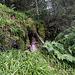 Wo kein Farn wuchert, wächst an den Hängen der kleinen Schlucht viel von diesem Waldgras. Extrem blöd zum Durchkraxeln weil durch die Feuchtigkeit rutschig.  Weiter ging es nicht: ich bin an der obersten Fallstufe angekommen ...