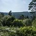 Über so einige einfach zu laufende Forstwege geht es nun wieder hoch. Die  Kiefer rechts war bei meinem letzten Besuch im Oktober stark geschädigt (Borkenkäfer?) und wird das waldige Tal des Ilgenbachs leider wohl nicht mehr lange verschönern.